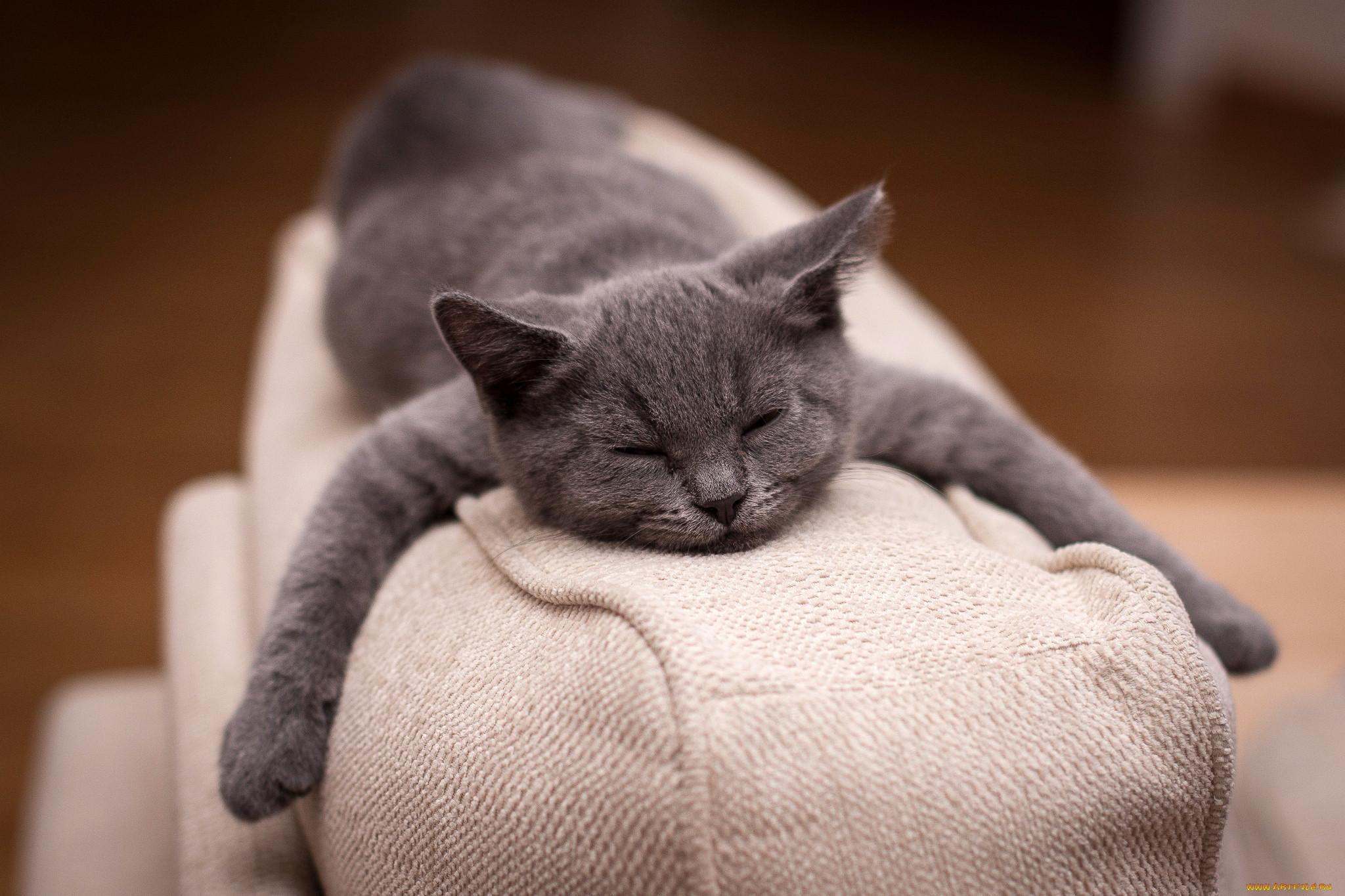 кизилюрта картинки котенок спит на диване всегда старается помогать